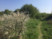 Green fields in spring sunshine