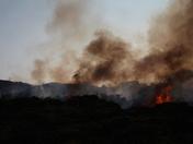 Beach Bush Fire Lowestoft, Gunton Warren
