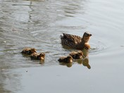 Family outing at Cringleford