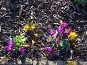 Spring hits Aldborough Hatch early