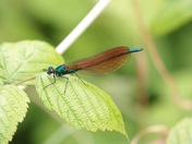 Flying Things From Backwell Lake