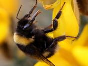 Sugar rich flower nectar 1