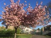Loxford Park