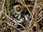 Framed by Nest B