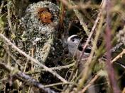 Framed by nest C