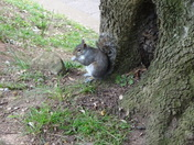 A squirrel spotted in Madeira Walk.