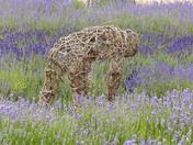 Framed. Figure Picking Lavender