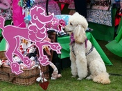 Poodle(Pretty in Pink)