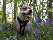 Scout feeling blue in Thorpe woods