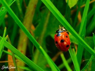 Photo Challenge - Fauna of North Devon