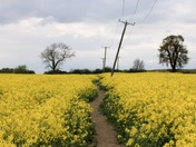 Out and about near warboys