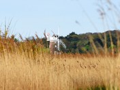 cley mill through the reeds