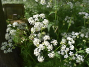 Wild Flowers on my walk today