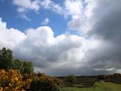 Stormy Roydon Common