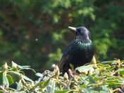 THE BEAUTY IN THE BUSH - STARLING COLOURS