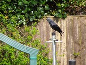 JACKDAW IMAGES - PART 1