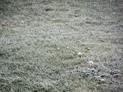 Late April frost