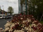 Scene from Ilford Lane Ilford