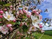 Sunny spring blossom