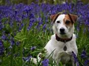 Spring at Blickling Estate
