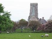 Lambing Time at Woodspring Priory