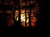 Hidden behind the trees A