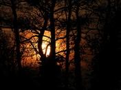 Hidden behind the trees C