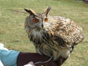 Owls and birds of prey at Easton farm park.