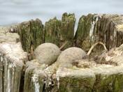 Unusual Nesting Site