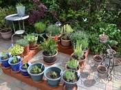 The garden comes to life as May warms up