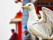 Seagull in the rain