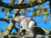 Lively squirrels at Oulton Broad