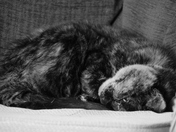Dream: Sleep and more Sleep.