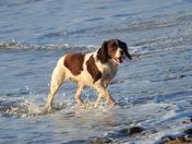 Cass On the beach