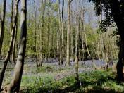 Woodlands, Tattingstone