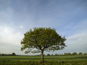 Early morning near Harleston