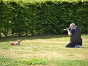 Take my photograph, said the Fox to the Photographer!
