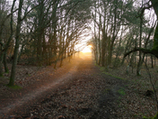 Woodbury Common at Dawn