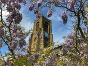 St Giles Church framed by Wisteria