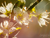 Spring in Rackheath Park