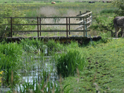 Thurne water meadows