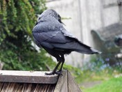 "THE JACKDAWS - PART 11 - ""LOOKING ABOUT"""