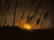 Reeds on the Skyline A