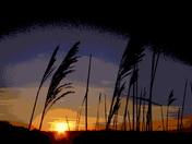 Reeds on the Skyline C