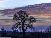 Skyline - Winter trees