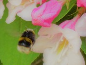 mORE bUSY bEES