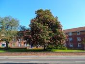 A DOMINANT TREE