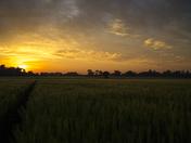 Beautiful Sunset over Beighton Fields