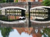 Swan Landing On The River