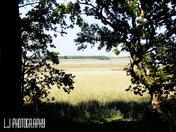 Dunwich Suffolk